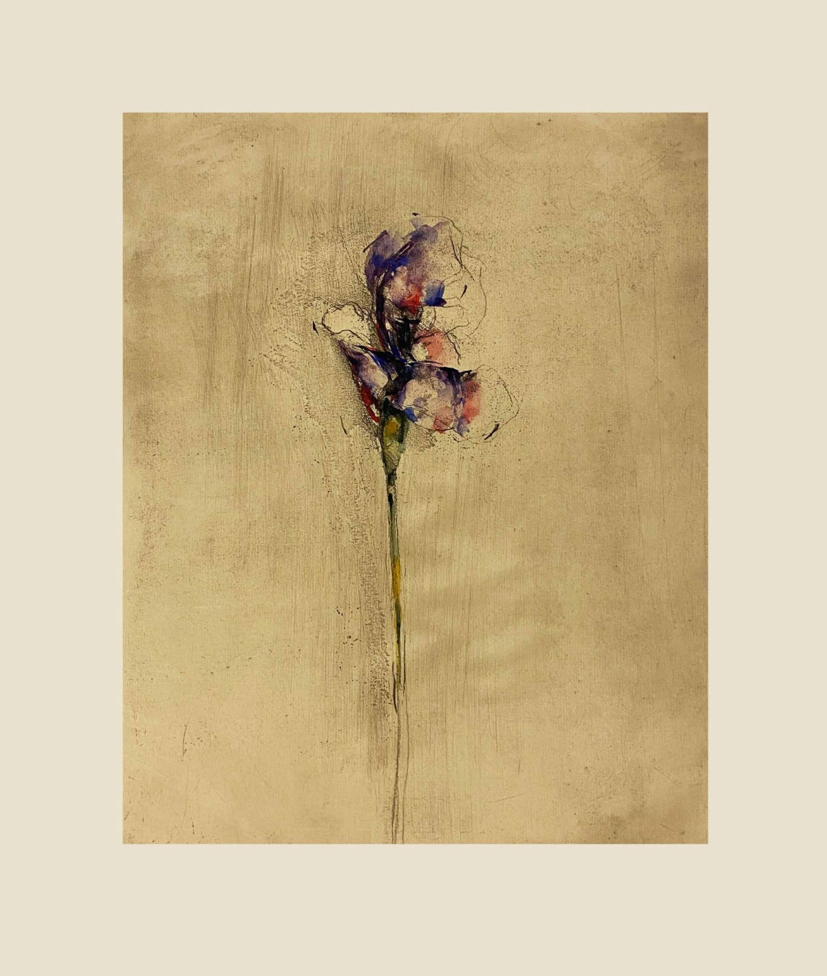 fiori 5